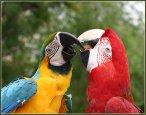 Аттракцион с попугаями, дрессированные собачки